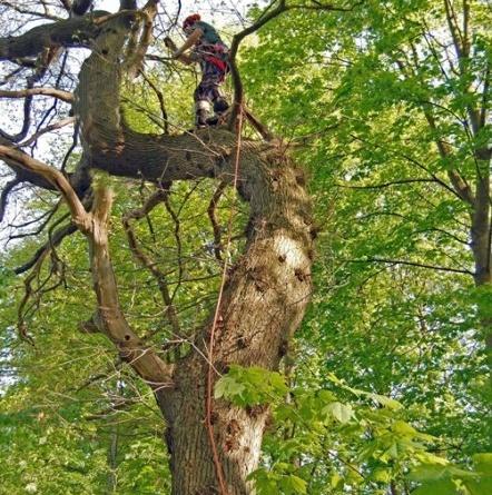 Fig. 10: Emnet til forstevnen hang inn over en barnehage og skulle heldigvis tas ned. (Foto: Thomas Finderup)