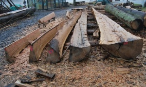 Fig. 15: Stammen er kløvet i halv, kvart, åttendedels og sekstendel. Nå starter tilhuggingen til planker. (Foto: Thomas Finderup)