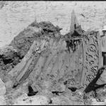 Fig. 7: Forstevnen under utgravningen i 1904. Merkelig nok ble det ikke funnet stort mer. (Foto: Kulturhistorisk Museum)